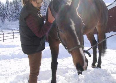 Hevonen talviauringossa