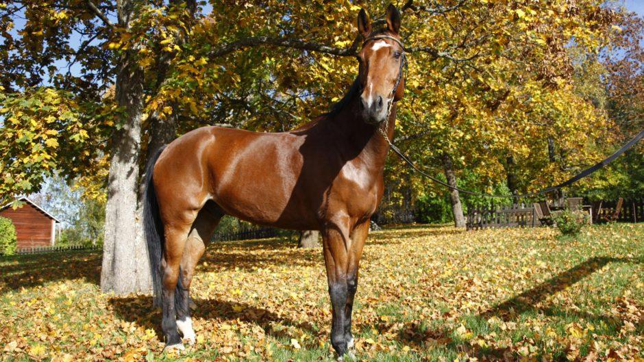 Hevonen syksyisellä pihalla