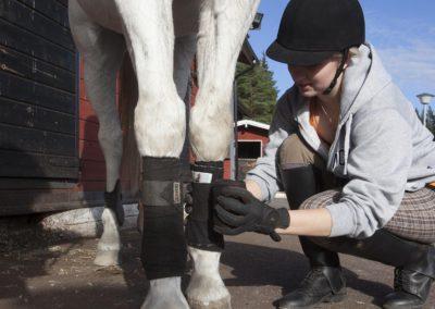 Hevosen kuntoonlaittoa