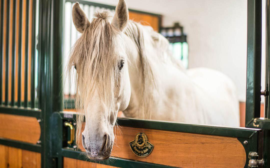 Espanjan Pre-hevonen tallissa