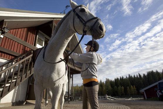 Ratsastaja nousemassa hevosen selkään tallilla