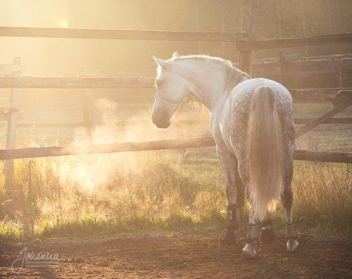 Hevonen tarhassa, kuva Johanna Vaurio