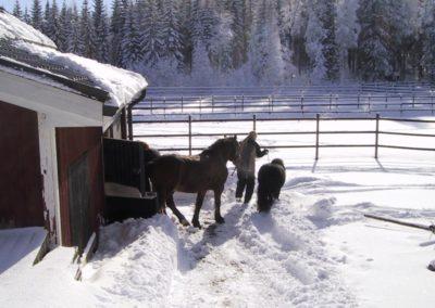 Hevostenhoitoa talvella