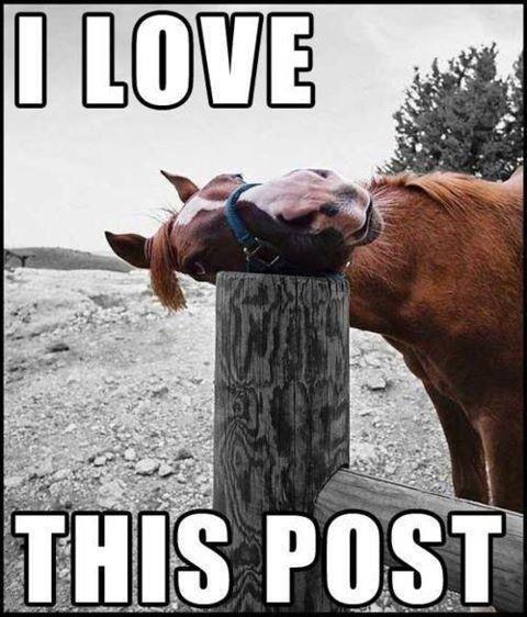 Hevosen käyttöliittymä