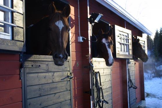 Hevosia Equstomin siirtotalleissa