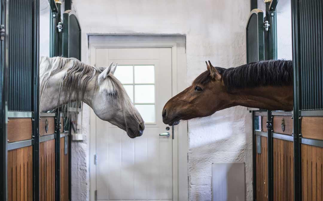 Hevoset kohtaavat tallilla